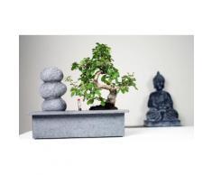 2x Bonsai: Stones Waterfall e Large Buddha