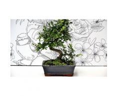 Bonsai olmo giapponese - Tronco contorto - 30 cm
